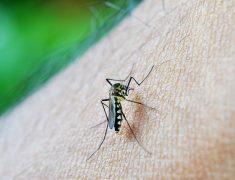 Le paludisme : halte aux moustiques !
